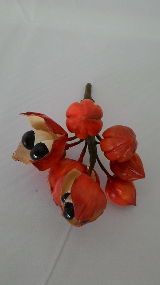 Fruta Guarana Artificial