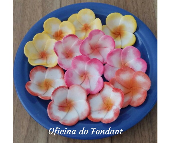 Plumeria Flor do Hawaii pasta americana