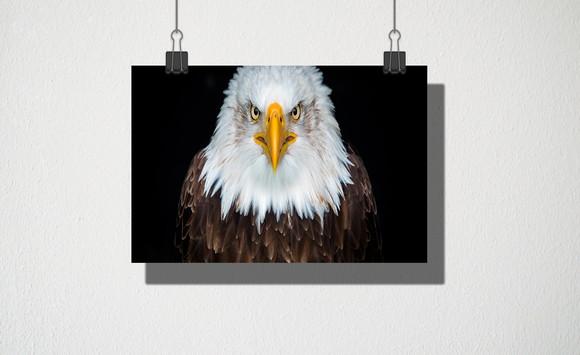 Poster De águia Elo7