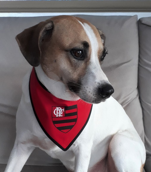 Bandana pet time Flamengo
