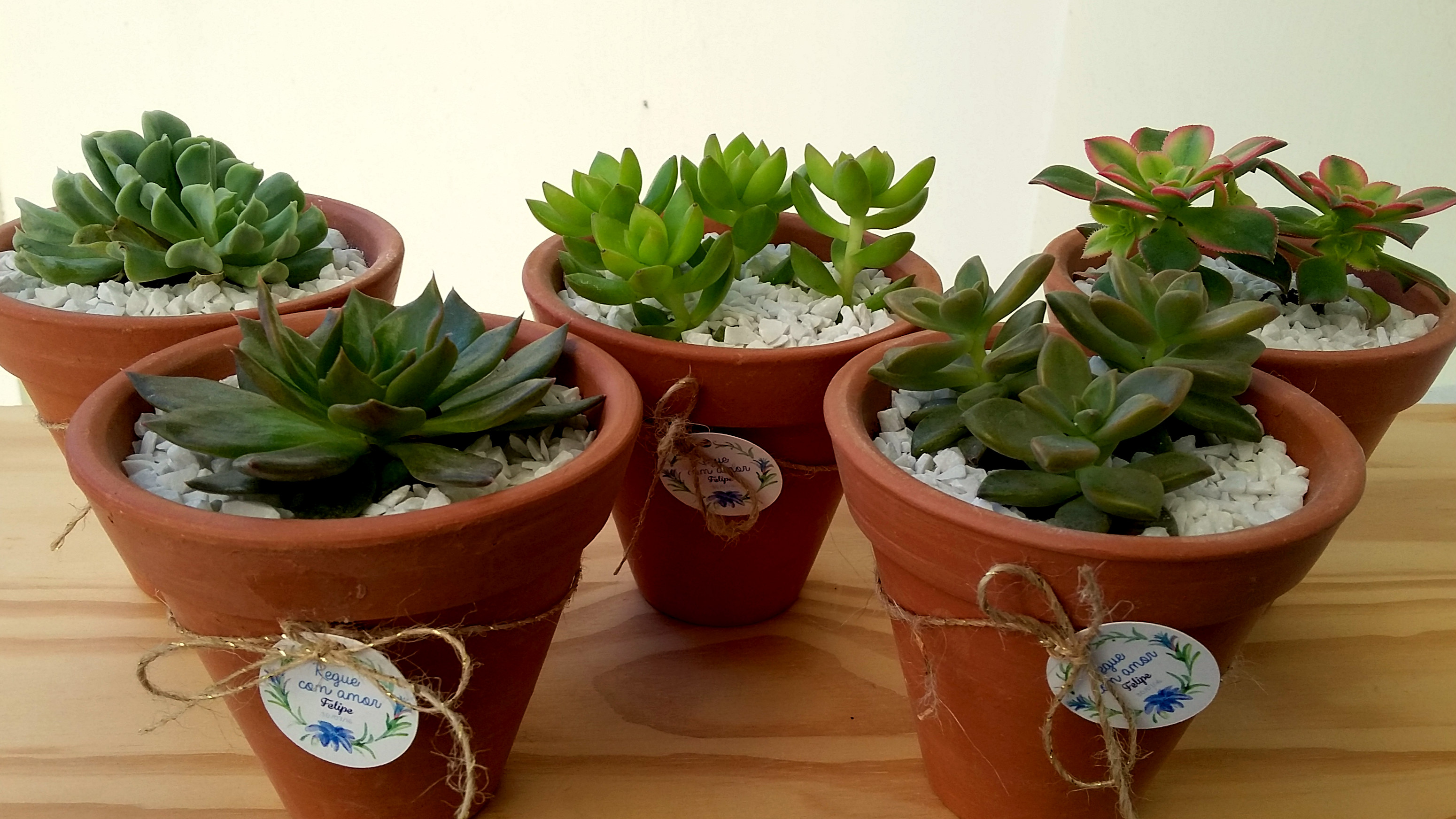 Vaso suculentas grande incantare paisagens e flores elo7 for Decoracion con plantas crasas