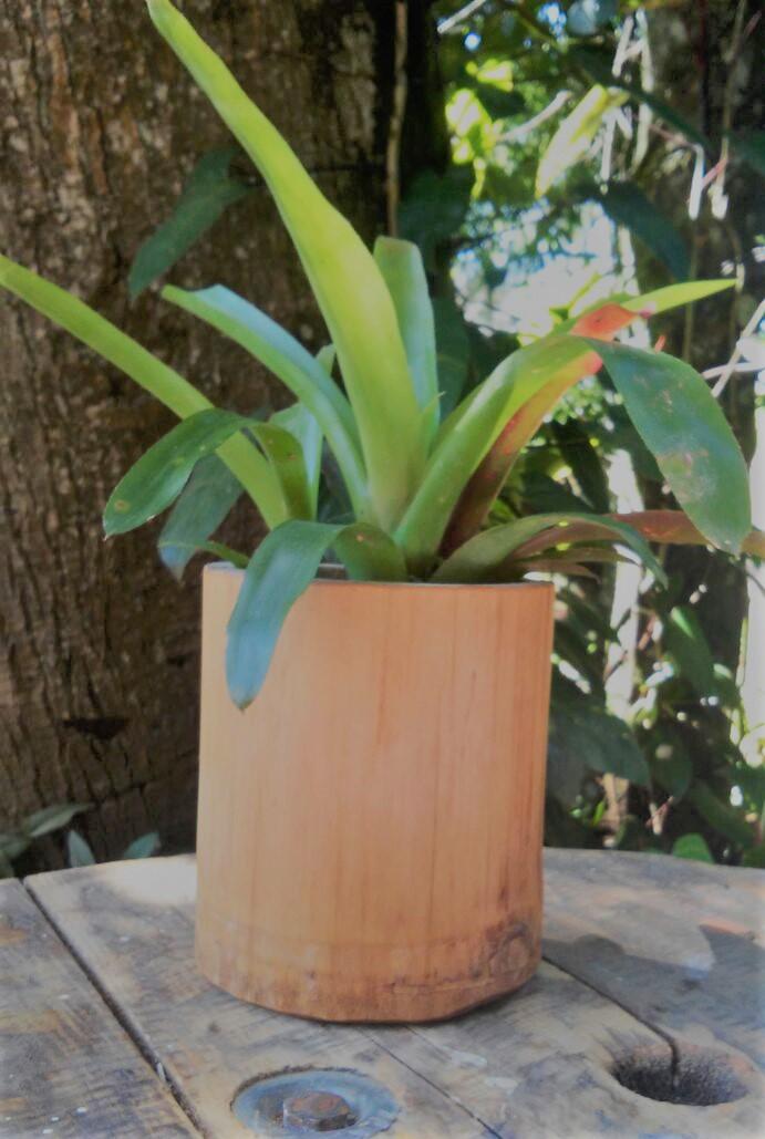 Vaso de Bambu | Elo7