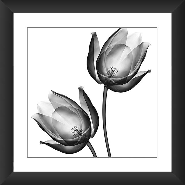 Flores Em Desenho Preto E Branco Mmod