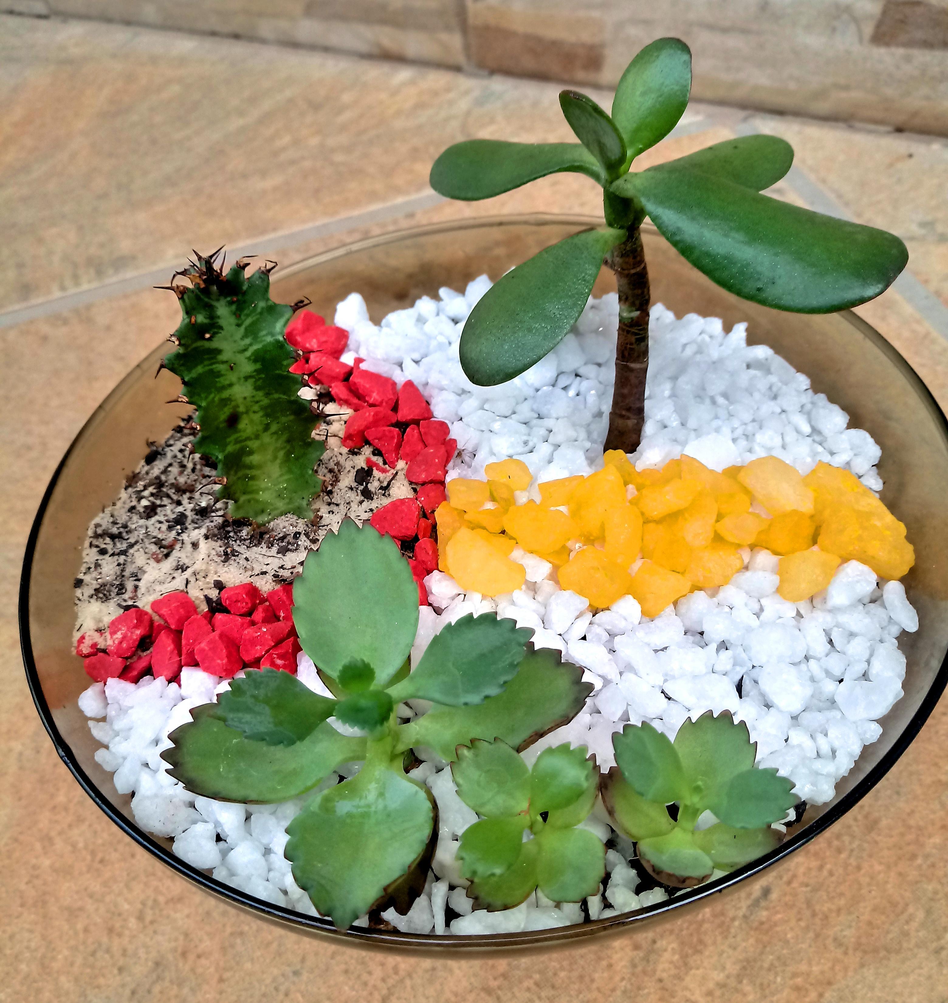 S250 Mini Jardim De Suculentas E Cactos