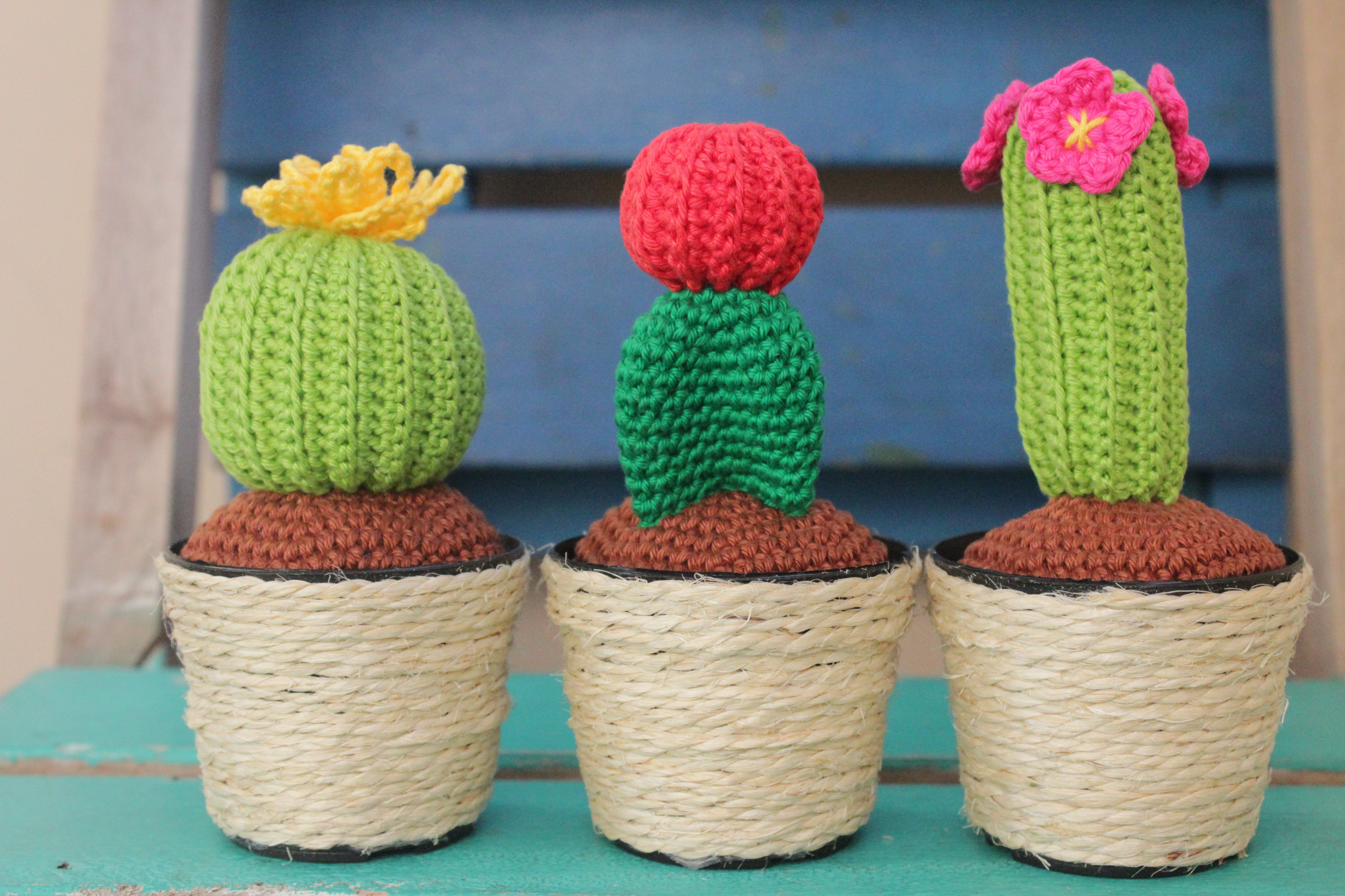 Crochet Characters Soft & Snuggly Cacti: 12 Succulent Designs ... | 3456x5184