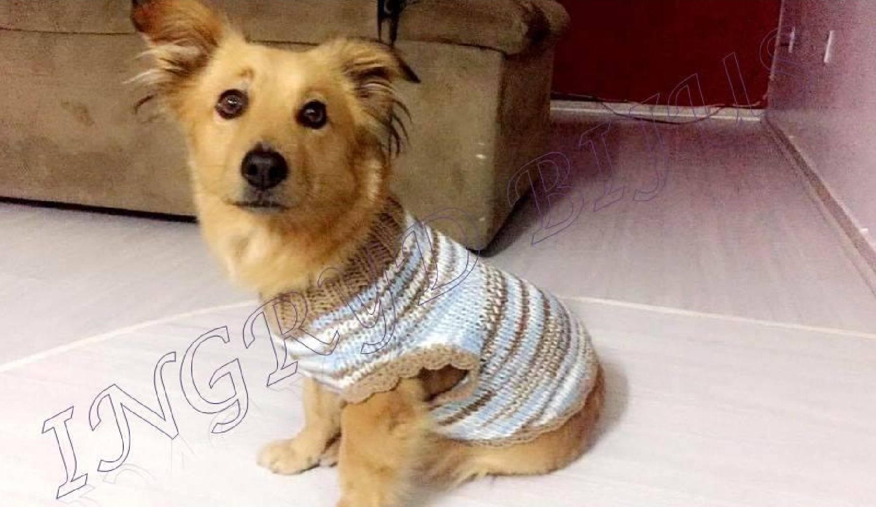 Amado Roupa de Frio para Cachorro | Elo7 IF26