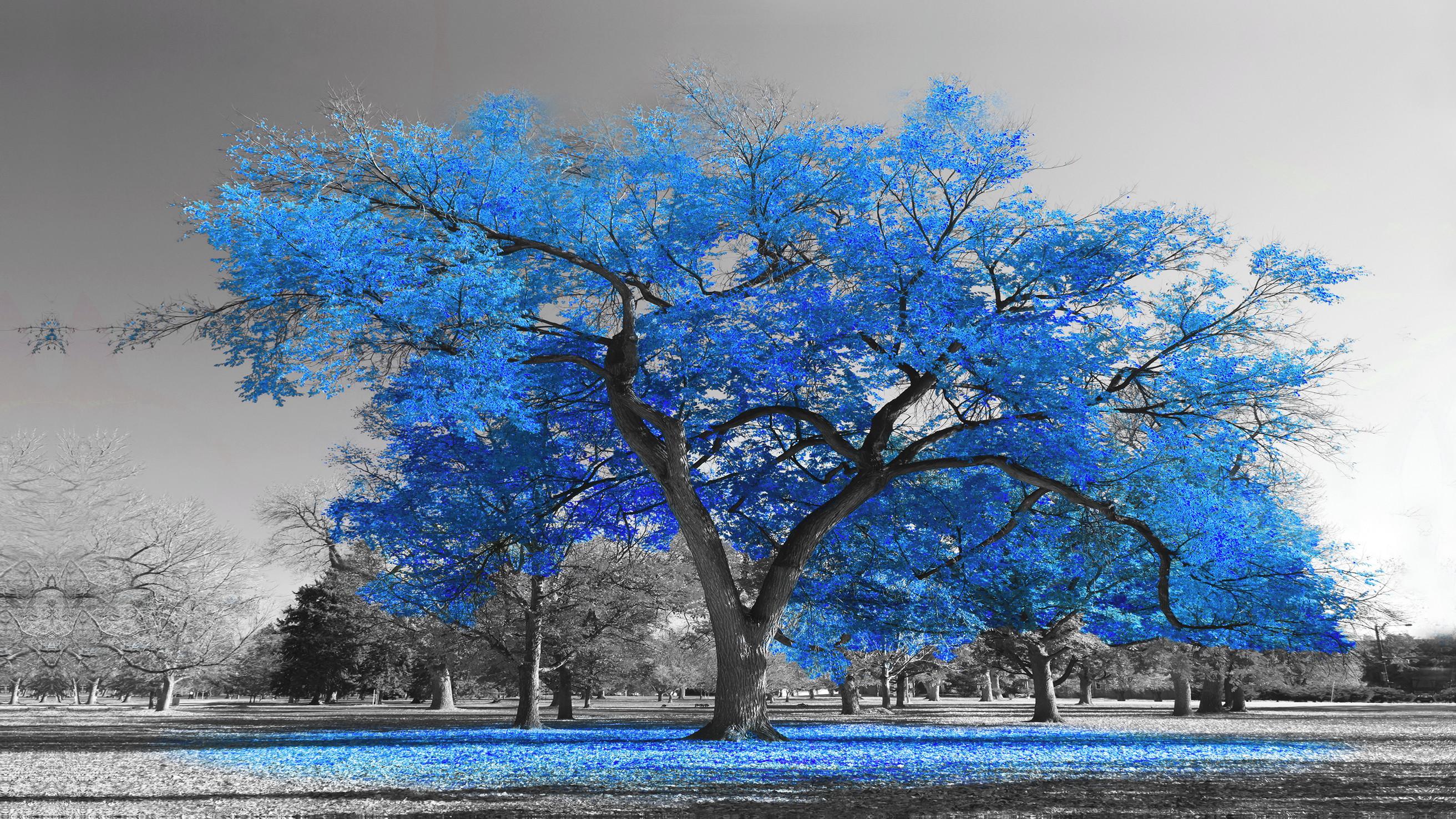 9b8bc6dcc374c Quadro Decorativo Arvore Azul Royal