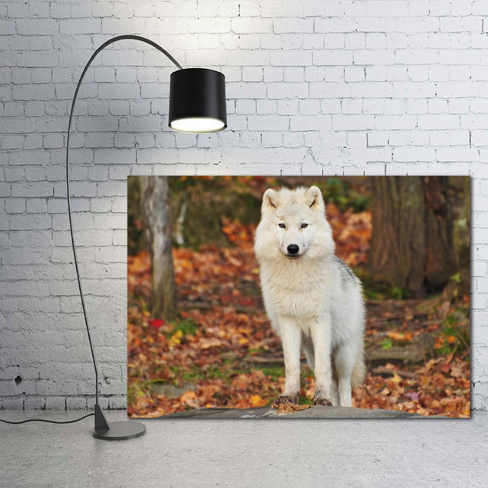 220965f48 Placa Decorativa Animais 99 Lobo 30x20cm
