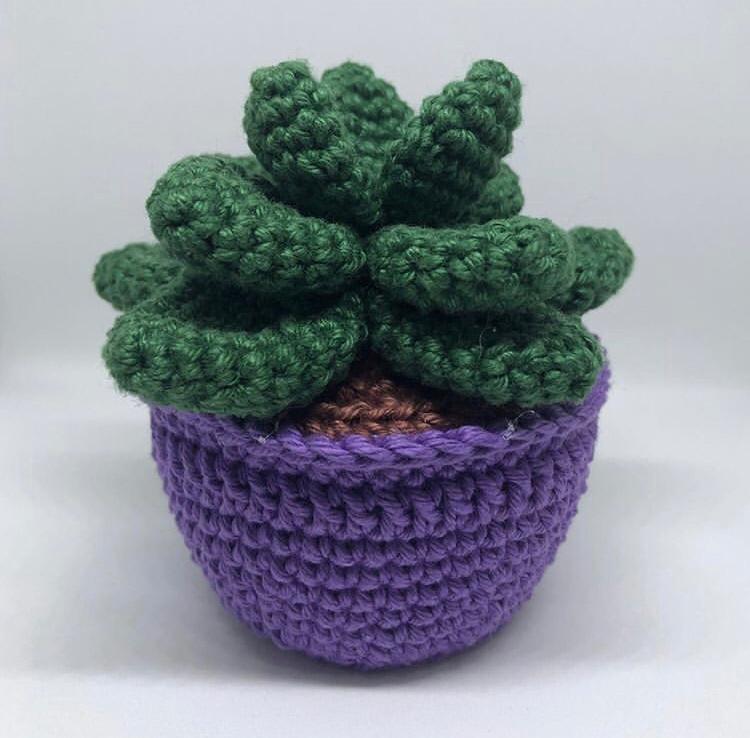 Cactus y suculentas de crochet, cactus amigurumi, suculenta ... | 738x750