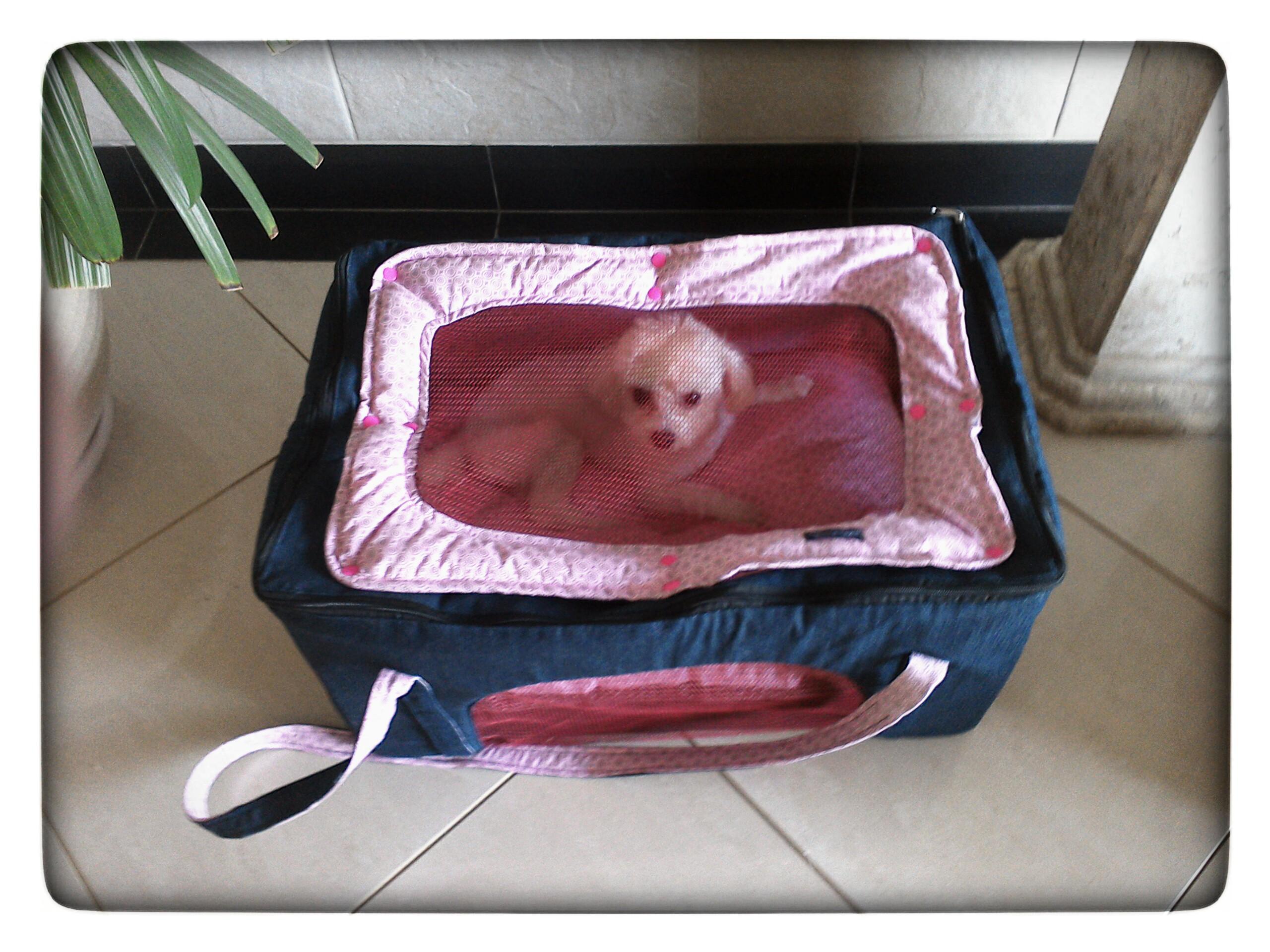 Bolsa de transporte aereo para caes : Bolsa pet para transporte a?reo xiqu? elo