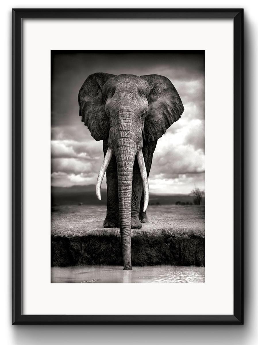 quadro elefante preto branco decoração com paspatur no elo7 red