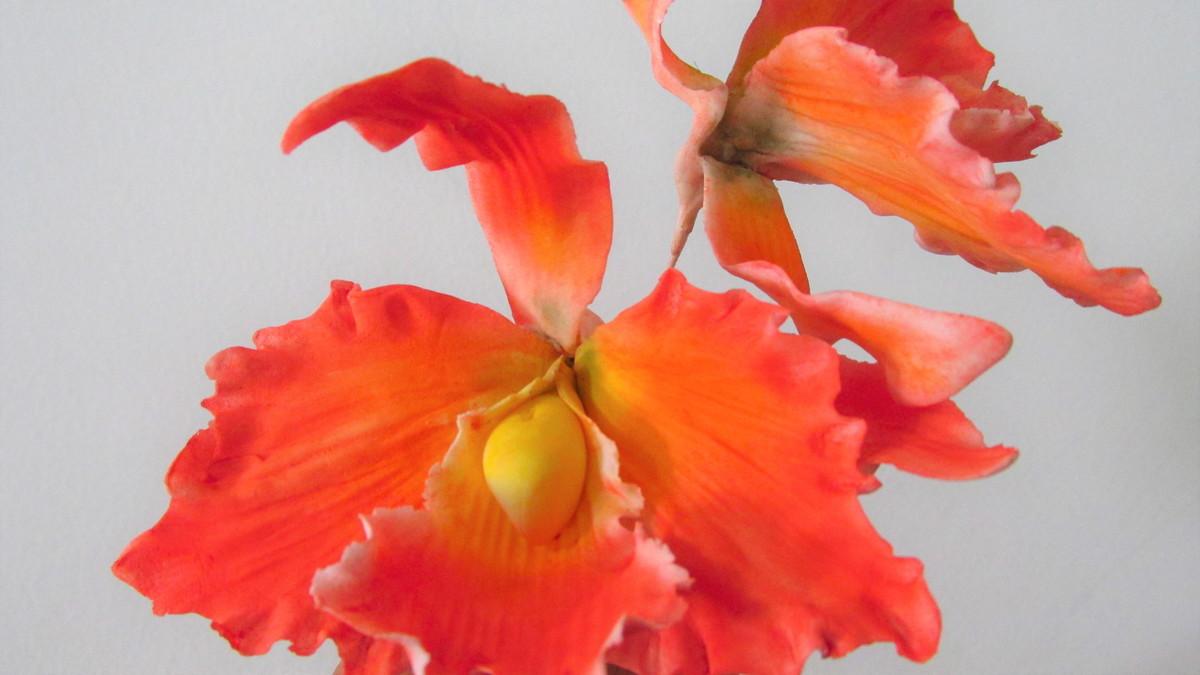 Duas Orquídeas Cattleya De Açúcar