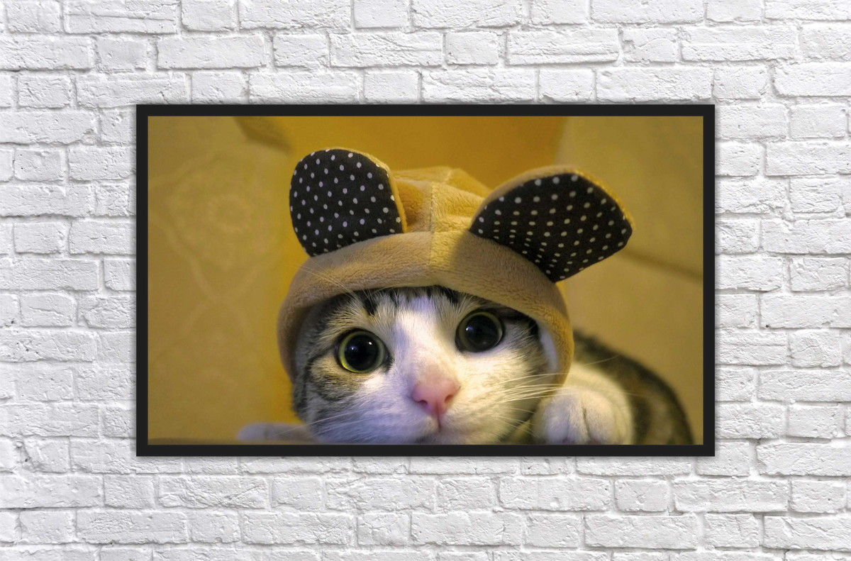 Quadro Gato Decoração Salas Interiores PET SHOP Decorar no Elo7   LM ... e4945ea68e