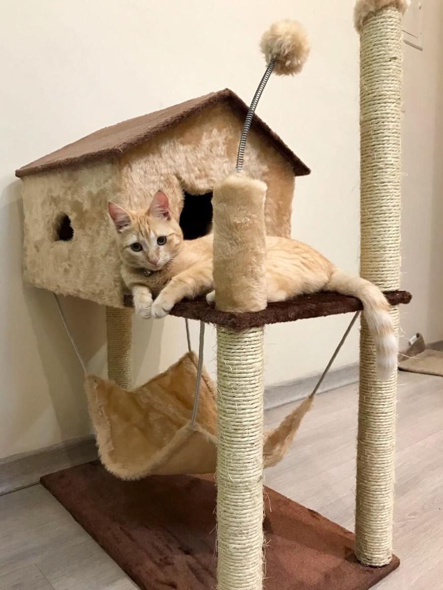 Arranhador de gato casa com rede lillo s pet elo7 - Casas para gatos baratas ...