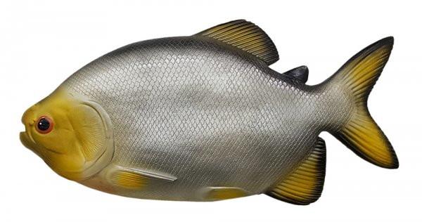 Características do Pacu  Peixe-pacu-em-resina-grande-peixe-grande