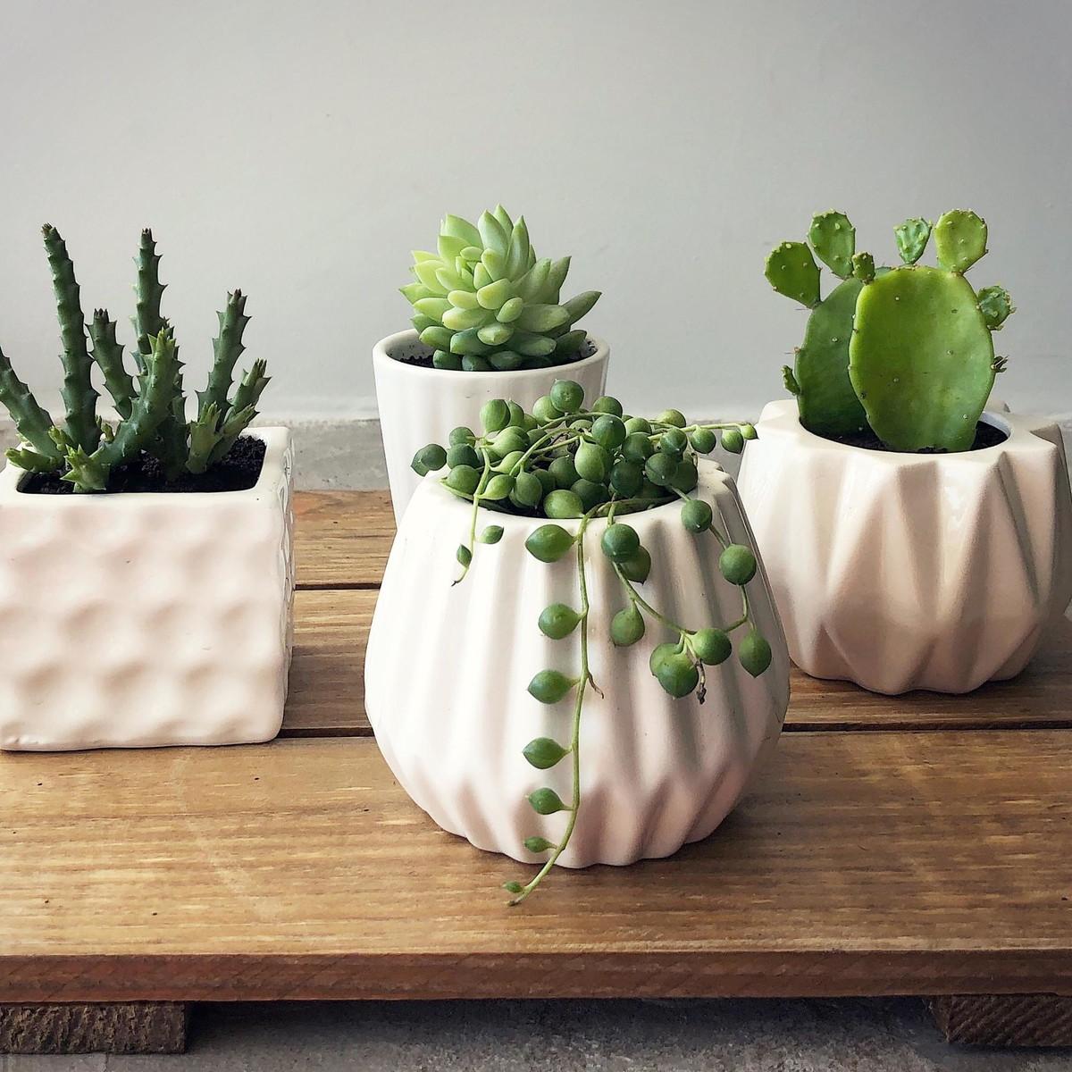 Resultado de imagem para vasos com cactos