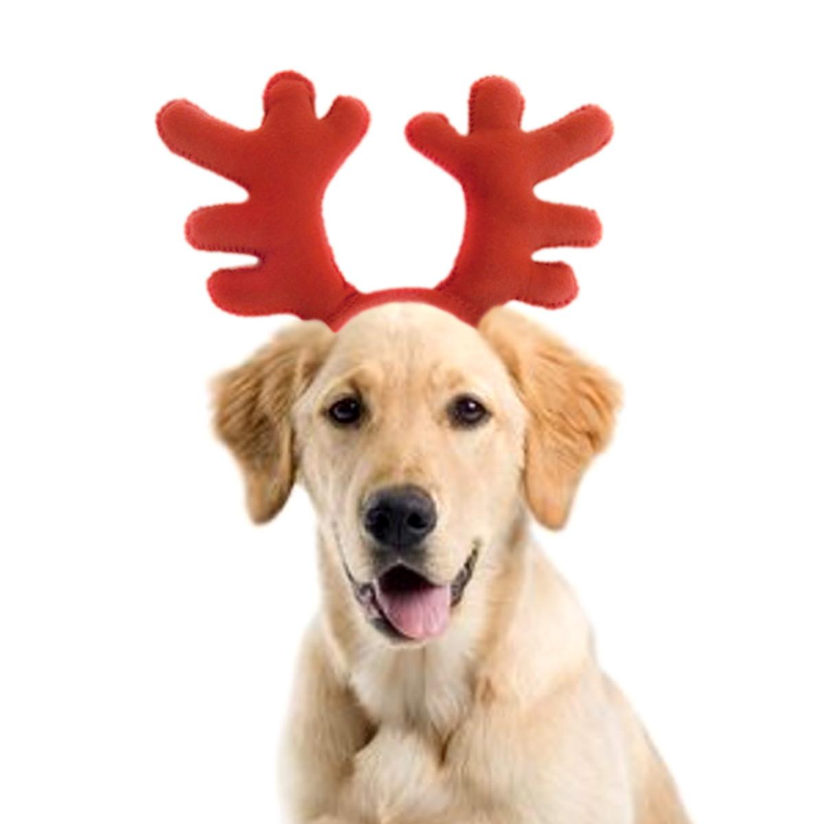 80d84a12672bd Chifre Rena Natalina Pet Em Feltro cão Médio e Grande Porte no Elo7 ...