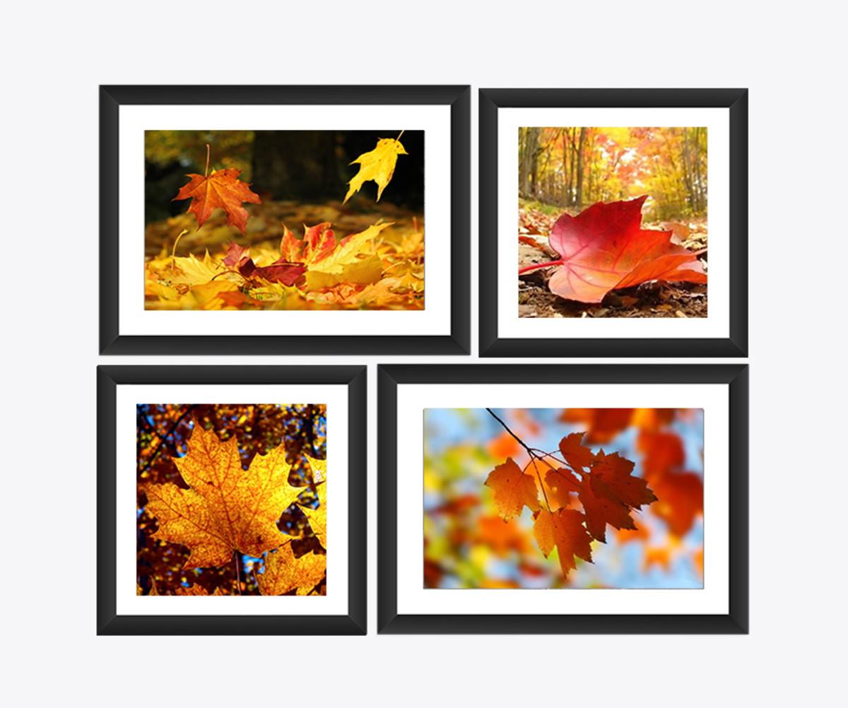 Kit 4 Quadro Folhas Outono Paisagem Arvores Bosque Natureza