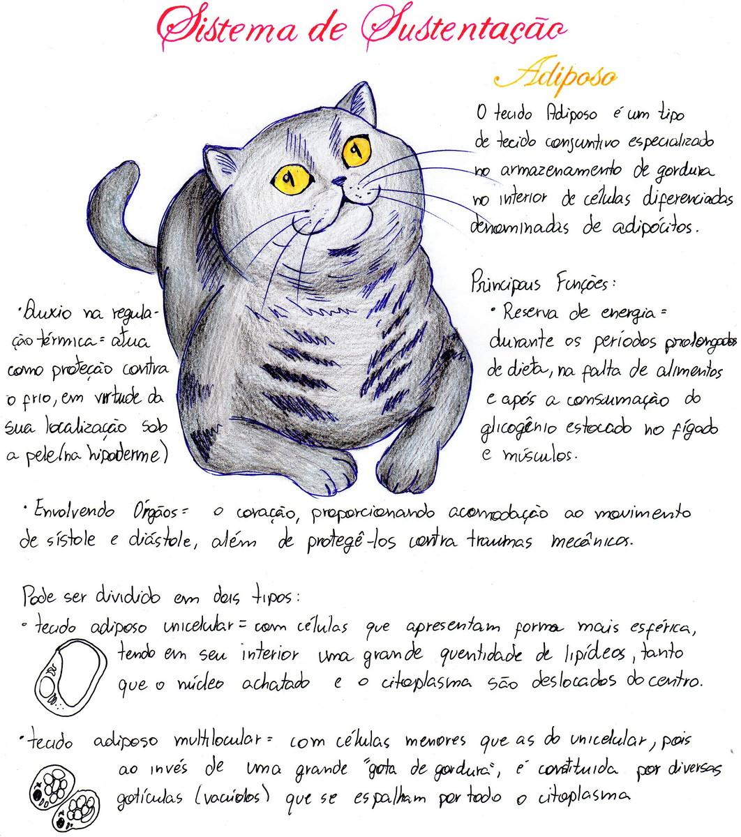 Desenhos Para O Seu Trabalho Academico No Elo7 Sfonsecan 11215de