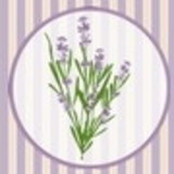 Lavanda Decor By Cute Bordados